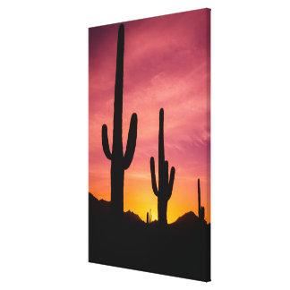 Impressão Em Tela Cacto do Saguaro no nascer do sol, arizona