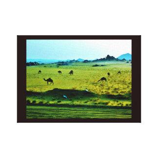 Impressão Em Tela Camelos da borda da estrada