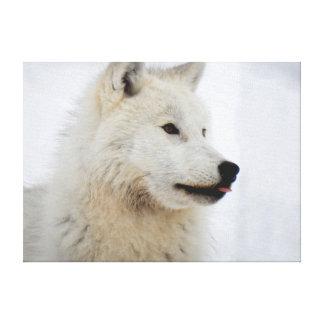 Impressão Em Tela Cara de um lobo ártico que cola sua língua para