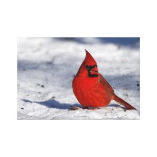 Impressão Em Tela Cardeal do norte masculino na neve