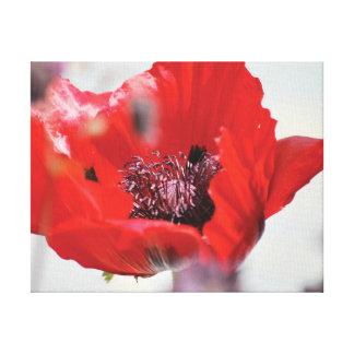 Impressão Em Tela Centro vermelho da papoila da foto bonita do
