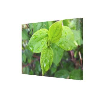 Impressão Em Tela Chuva sobre as folhas