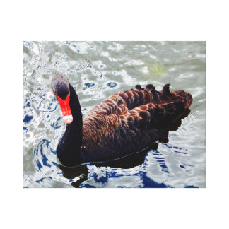 Impressão Em Tela Cisne preta em rippling a água azul