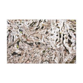 Impressão Em Tela Composição da raiz da árvore