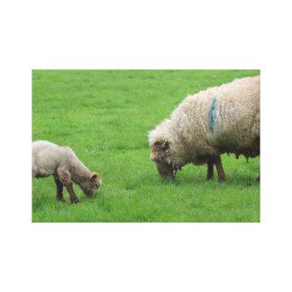 Impressão Em Tela Cordeiro e carneiros do primavera