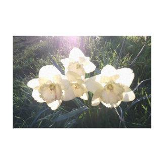 Impressão Em Tela Daffodils do amanhecer