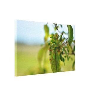 Impressão Em Tela Dogwood de florescência