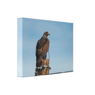 Impressão Em Tela Eagle dourado