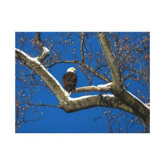 Impressão Em Tela Eagle em uma árvore nevado