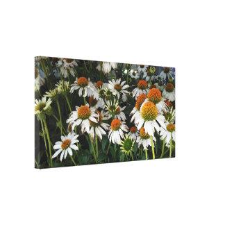 Impressão Em Tela Echinacea branco louco Coneflower roxo oriental