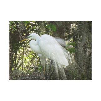 Impressão Em Tela Egret branco da coroa na plumagem de cortejo