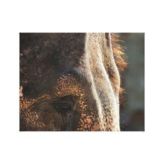 Impressão Em Tela Emoção dos elefantes