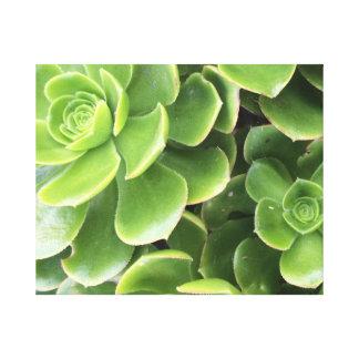 Impressão Em Tela Erva verde