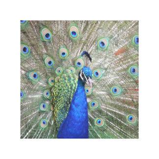 Impressão Em Tela Exposição do pavão