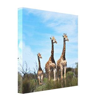 Impressão Em Tela Família do girafa na cume gramínea