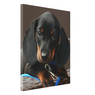 Impressão Em Tela Filhote de cachorro do Dachshund