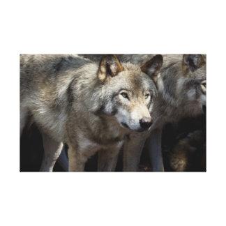Impressão Em Tela Fim-acima de um lobo cinzento