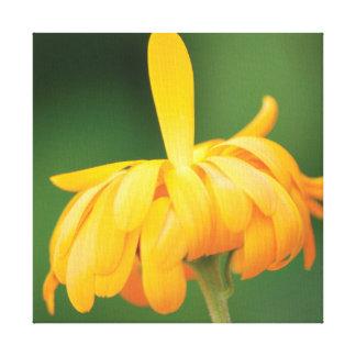 Impressão Em Tela Flor alaranjada da foto bonita do fim-acima no