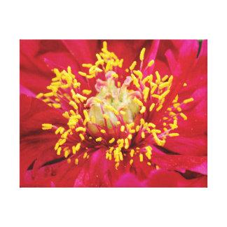 Impressão Em Tela Flor bonita do rosa da foto do fim-acima com