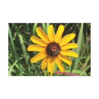Impressão Em Tela Flor Brown-Eyed da flor de Susan com abelha