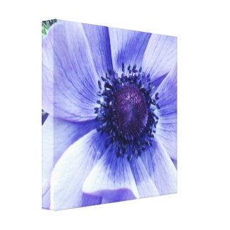 Impressão Em Tela Flor da papoila azul,