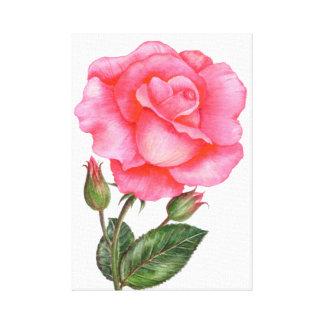 Impressão Em Tela Flor floral da arte do rosa botânico do rosa da