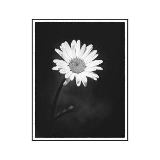 Impressão Em Tela Flor minimalista dramática preto e branco da