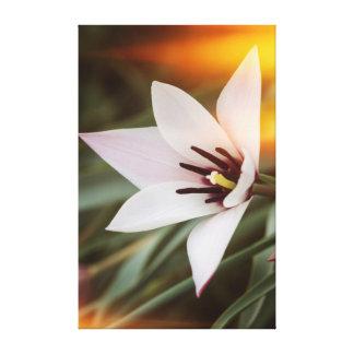 Impressão Em Tela flor no jardim