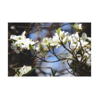 Impressão Em Tela Flores do Dogwood