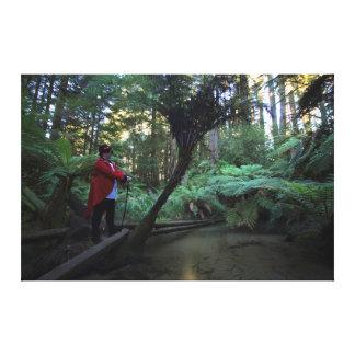 Impressão Em Tela Floresta de Waipa com Ringmaster