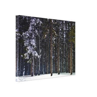 Impressão Em Tela floresta do pinho com neve-Chipre