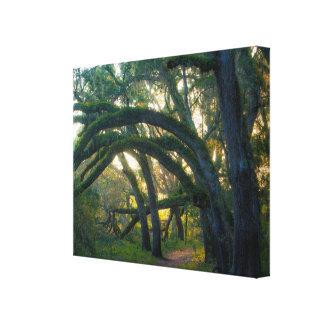 Impressão Em Tela Floresta indiana do estado do lago