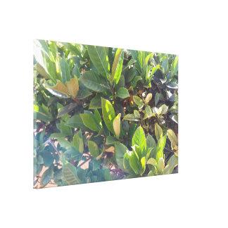Impressão Em Tela Folhas enormes da planta verde na luz solar