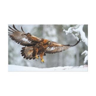 Impressão Em Tela Foto de Eagle dourado