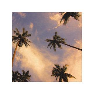 Impressão Em Tela Foto tropical do verão da palmeira