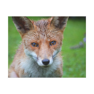 Impressão Em Tela Fotografia bonita do fim-acima da raposa no jardim