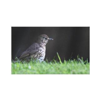 Impressão Em Tela Fotografia do pássaro