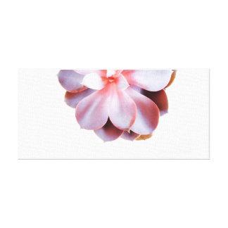 Impressão Em Tela Fotografia do Succulent