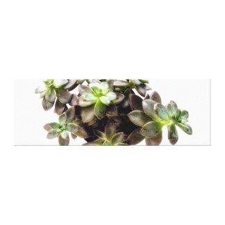 Impressão Em Tela Fotografia II do Succulent