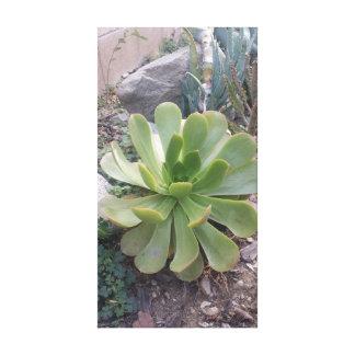 Impressão Em Tela Fotografia original de uma planta do succulent