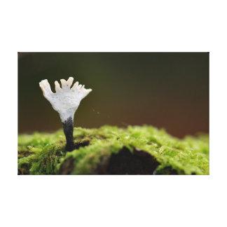 Impressão Em Tela Fungo de Candlesnuff na árvore de faia