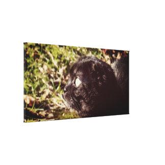 Impressão Em Tela Gato de Munchkin que joga na luz solar