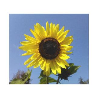 Impressão Em Tela Girassol amarelo e o céu azul