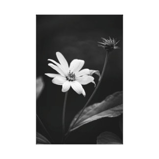Impressão Em Tela Girassol falso do Heliopsis preto e branco