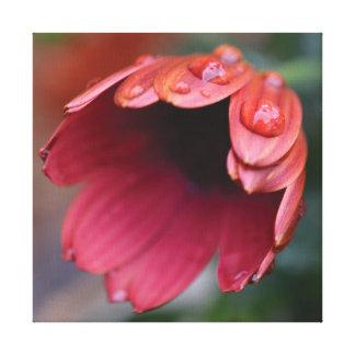 Impressão Em Tela Gotas vermelhas da flor & da água da foto bonita