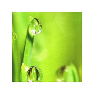 Impressão Em Tela Grama molhada com pingos de chuva