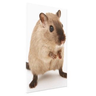Impressão Em Tela Hamster