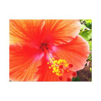 Impressão Em Tela Hibiscus alaranjado