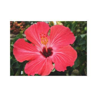Impressão Em Tela Hibiscus cor-de-rosa