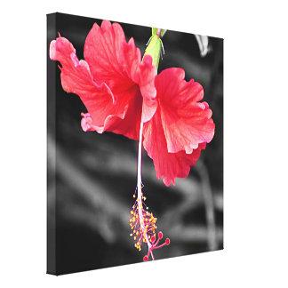 Impressão Em Tela Hibiscus cor-de-rosa com fundo preto e branco